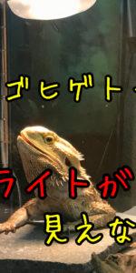 フトアゴヒゲトカゲの視覚について。【本当に赤いランプは見えないの?】