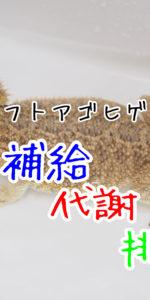 トカゲの水分補給・代謝・排泄について考察してみた。