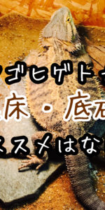 フトアゴヒゲトカゲのケージ底砂・床材について迷走中。おすすめは何だ?