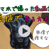 スマホで撮った動画を売る方法【衝撃映像は無償でテレビ局に渡したらダメ!!】