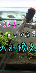 超おすすめ!水槽の水替えにはこのホースを使え!【元ペットショップ定員お墨付き!】