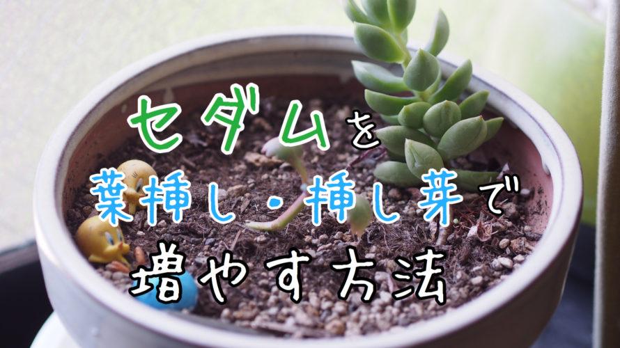 セダムを葉挿し・挿し芽で増やそう日記。その①:セダムの増やし方について