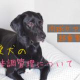 犬の肉球ケアは超重要!【夏や冬、靴は履かせるべき?】