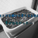 モミジを種から育てる日記。その②:芽が・・・・出なかったよ!