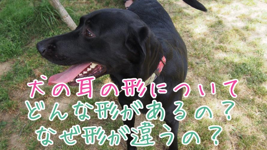犬の耳の形にはどのような違いがあるの?なんで形違うの?